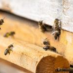 das erwachen der Bienen...